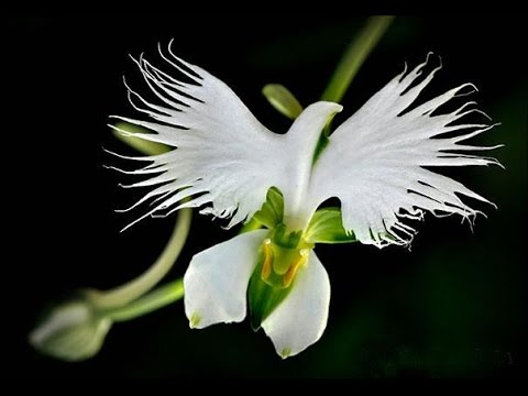 Необычные садовые растения