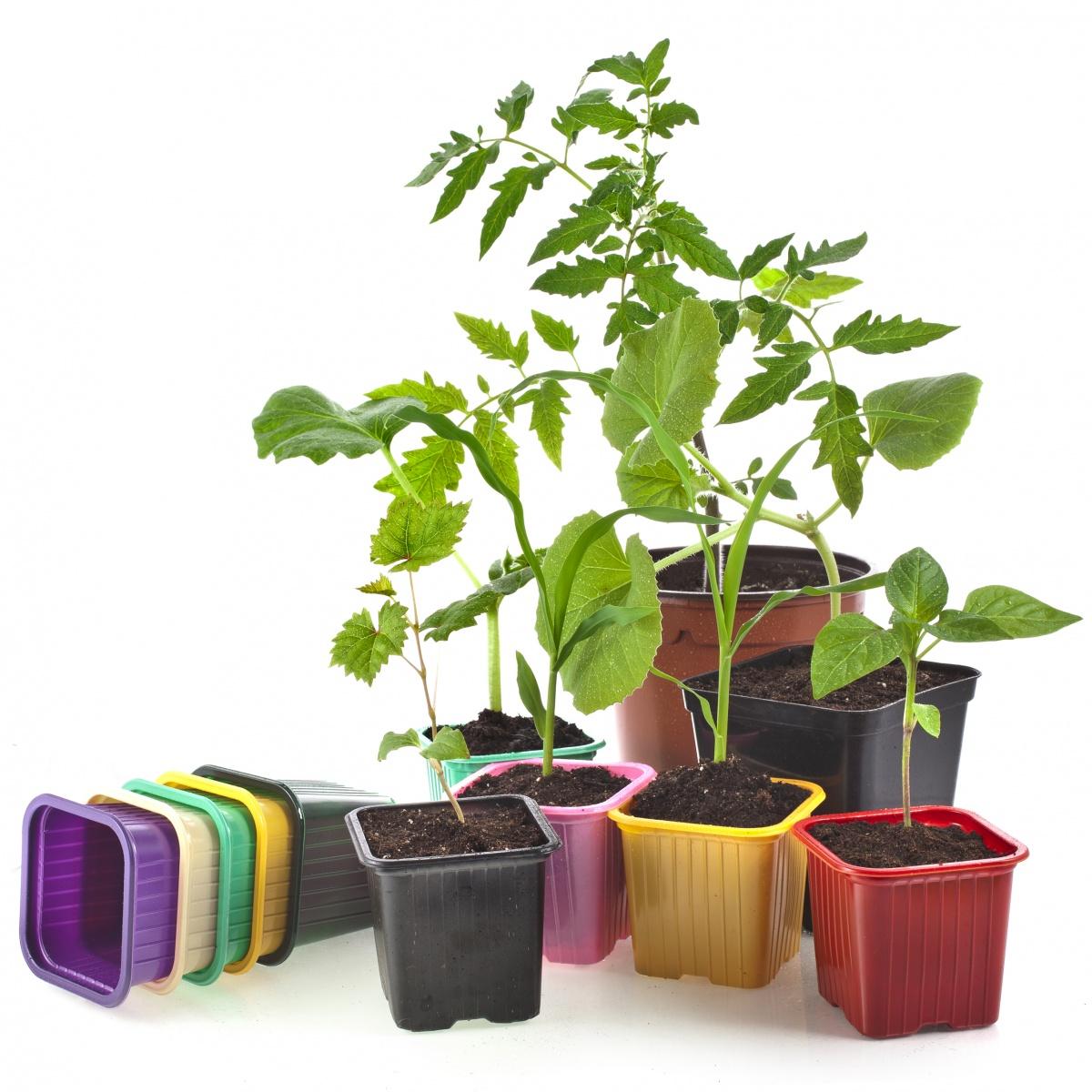 Выращивание рассады безземельным способом