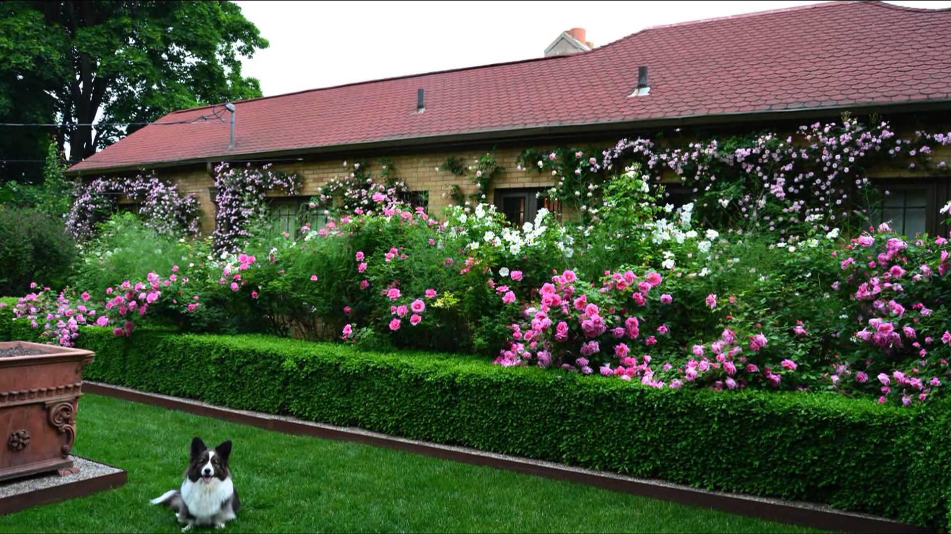 Живая изгородь — настоящее украшение сада