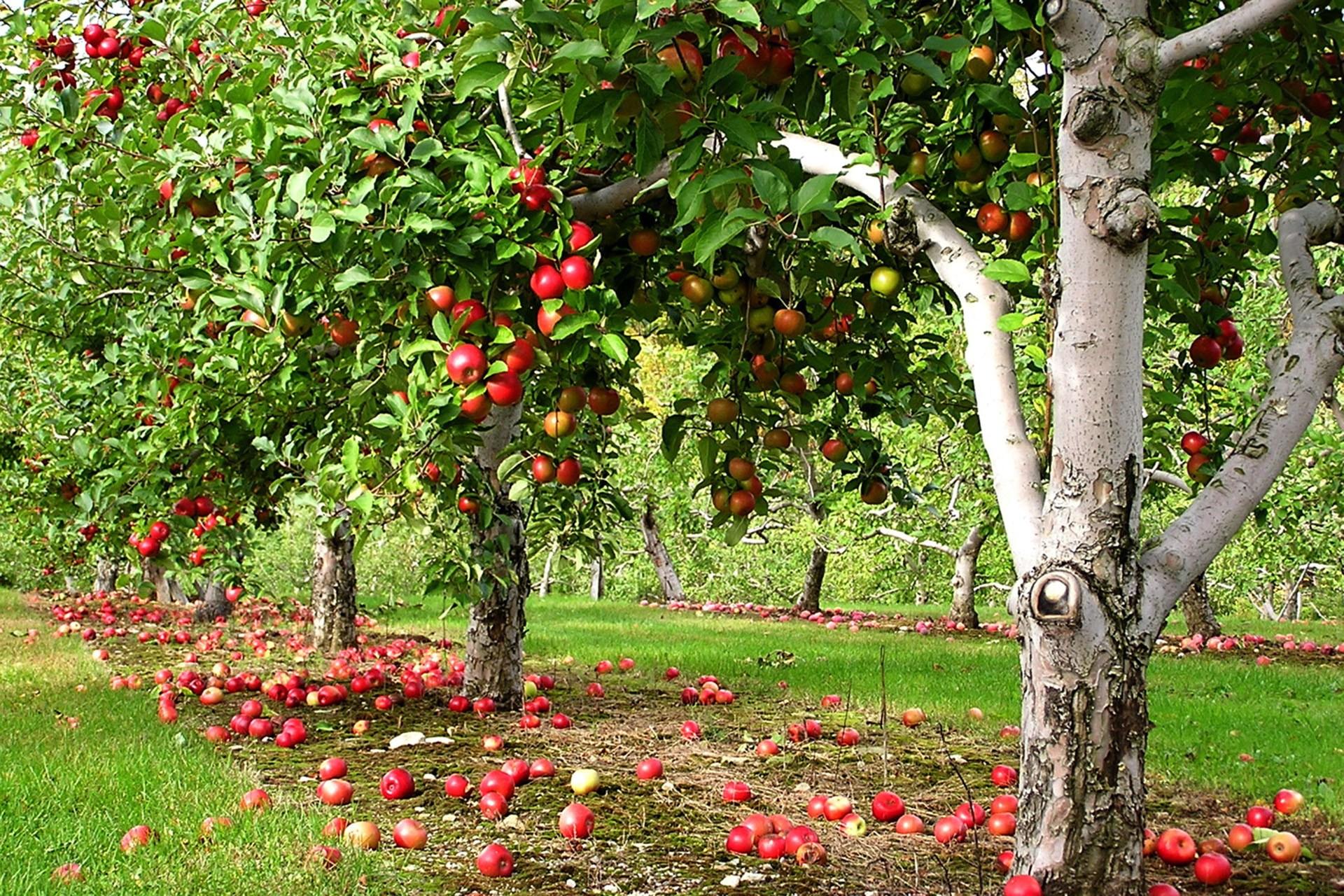 Размножение плодовых и ягодных растений