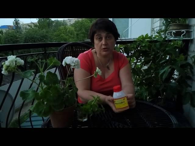 Актофит-биологоческий препарат для борьбы с вредителями.