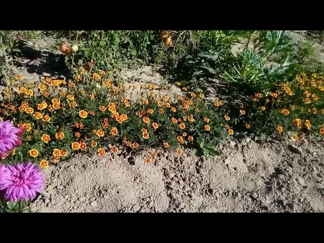 Цветущий огород!