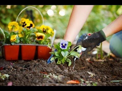 Как правильно сажать семена цветов? Дача ТВ