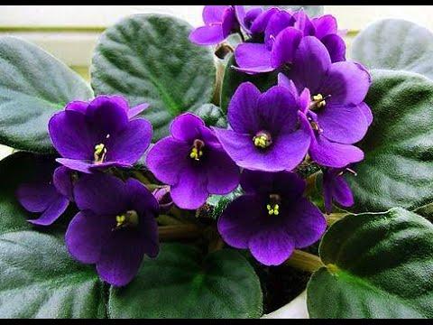 Как ухаживать за комнатными растениями и цветами? Дача ТВ