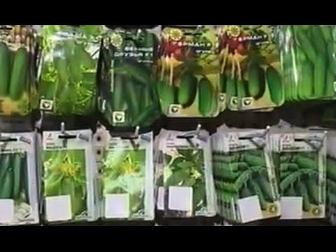 Как выбрать лучшие семена?  Дача ТВ
