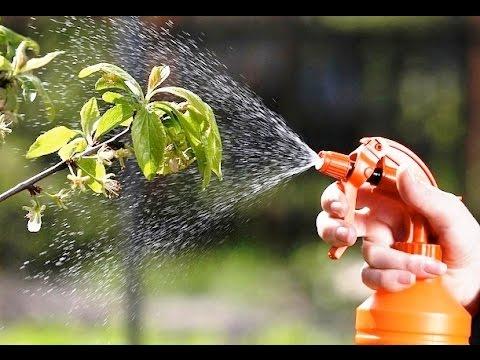 Лучшие препараты для защиты растений! Дача ТВ