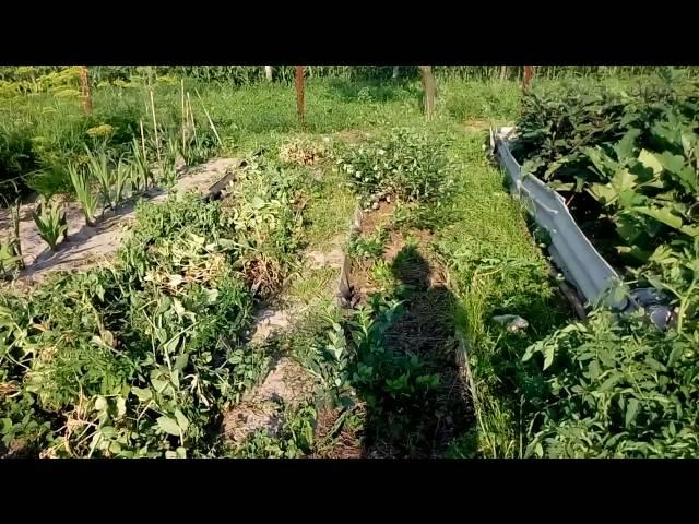 Мой огород