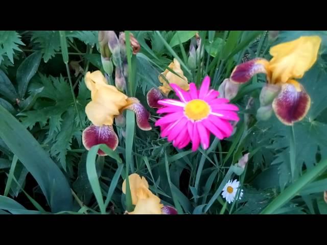 Мой сад в конце мая