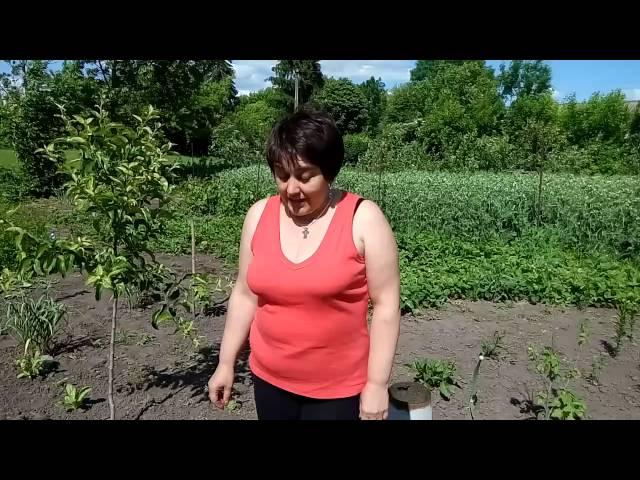 Первые огурцы и томаты