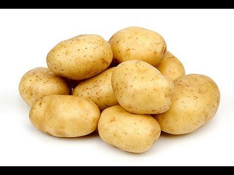 Сорта картофеля. Как выбрать лучший? Дача ТВ