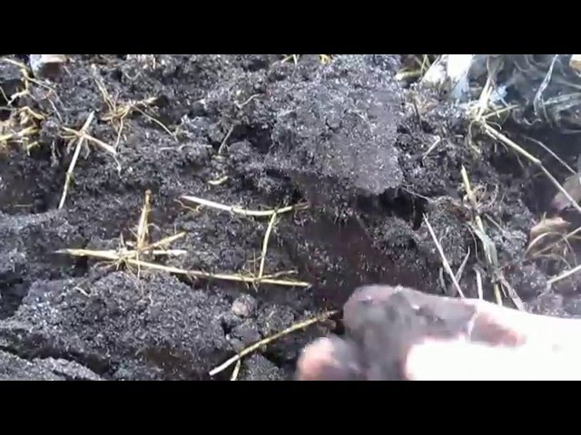 Супер способ получения, экстра грунта для растений. Как сделать комбигрунт для рассады и огорода.