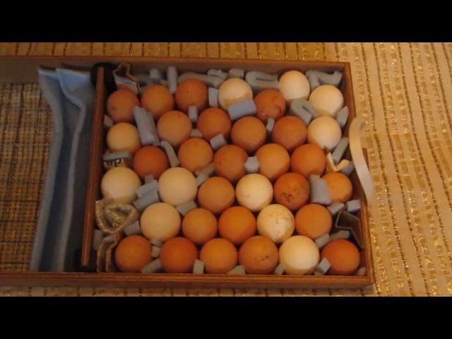 Блиц норма. Подготовка и настройка инкубатора. Закладка куриных яиц в инкубатор.