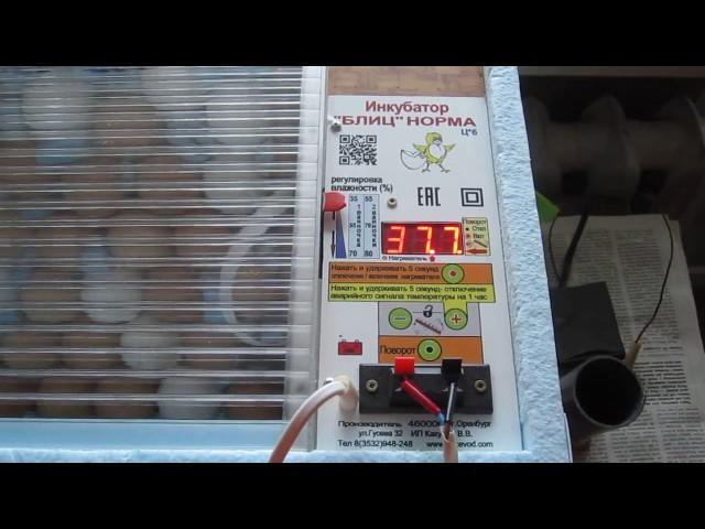 «Блиц Норма»1-е сутки инкубации.Проверка и сравнения температуры инкубации. Автоповорота лотка.