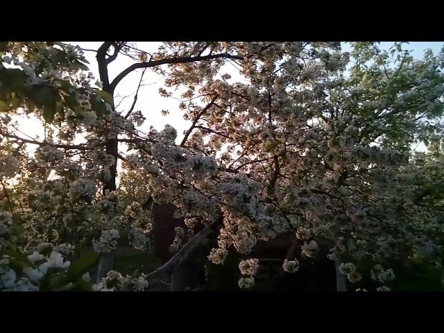 Приглашаю в цветущий, фруктовый сад!