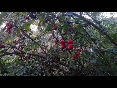 Краски октября в осеннем саду!