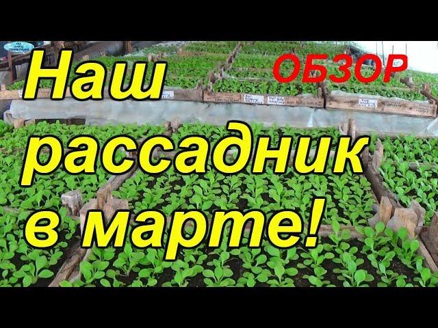 Обзор нашего рассадника на 19 марта 2018 года! Огурцы, помидоры, петуния — в одном видео!