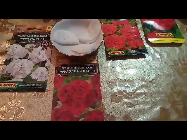 Очень быстрые всходы пеларгонии—залог хороших семян!!!