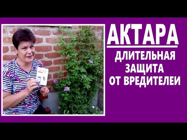 Системные инсектициды АКТАРА — длительная защита от тли, клещей,гусениц… Знакомство с препаратом