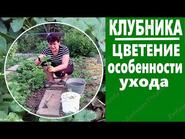Уход за клубникой во время цветения  Общие моменты и особенности агротехники в южном регионе