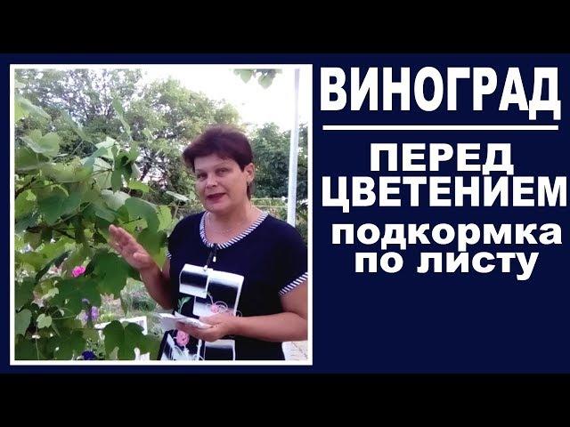 Выращивание винограда . Внекорневая подкормка винограда перед цветением .  ЭТО ВАЖНО