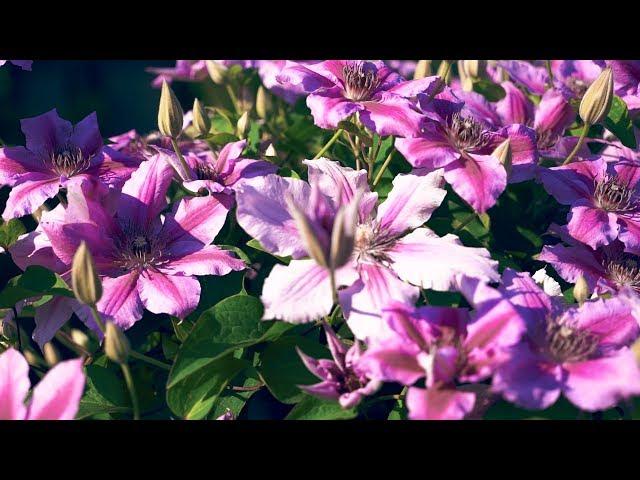 Цветущий сад. Лето продолжается