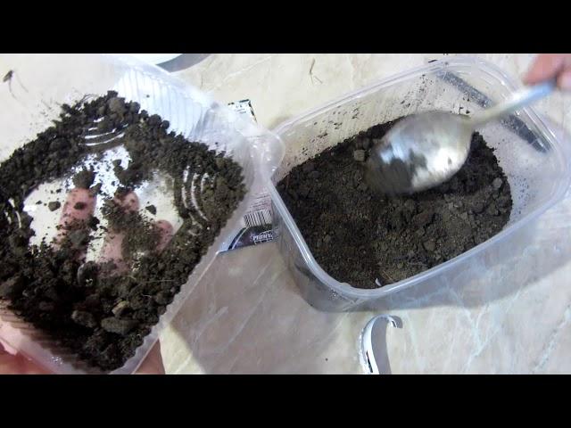 Особенности посадки мелких семян. Садим двулетники на рассаду