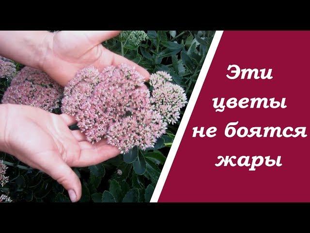 Самые  устойчивые цветы для сада