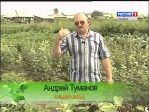 Урожайные грядки. Как выращивать картофель?