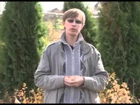 Урожайные грядки. Как выращивать крыжовник?