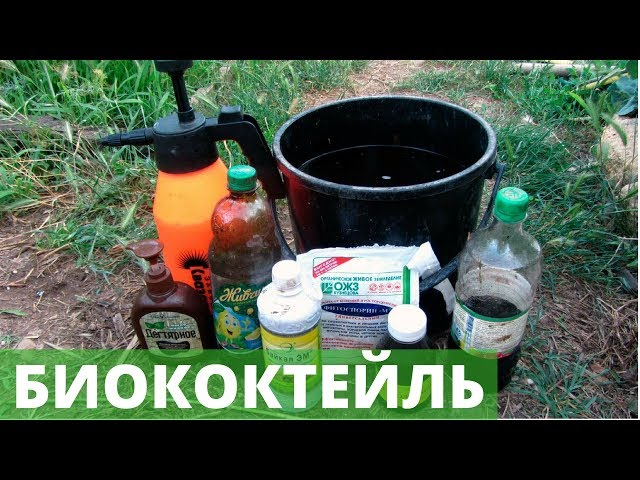 Защита растений «БЕЗ ХИМИИ»