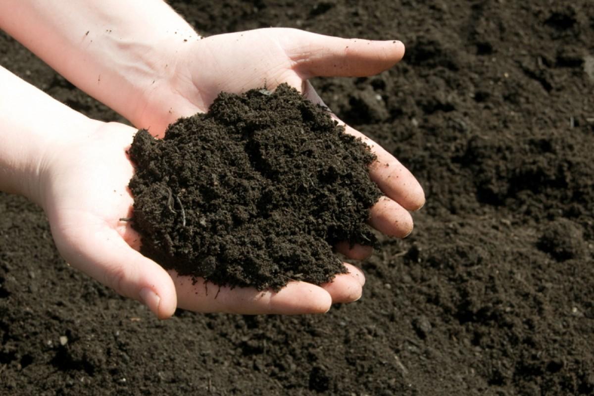 Почвы.